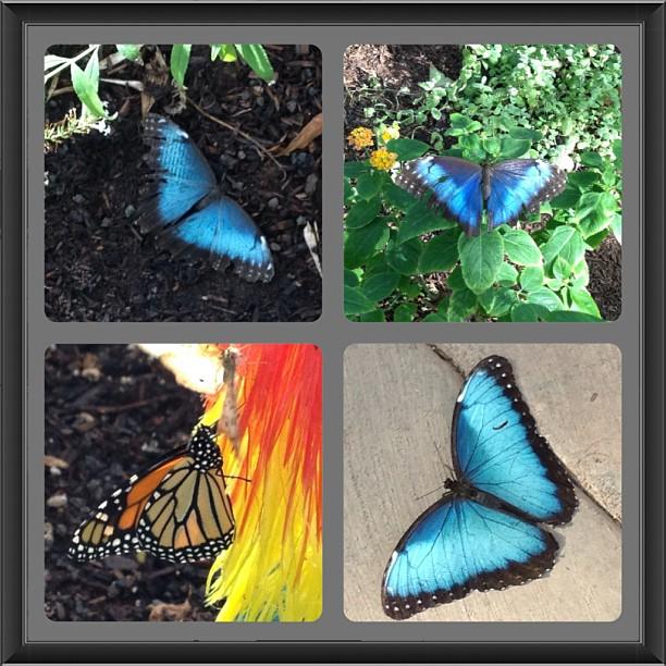 butterfly wonderland 9.15.13
